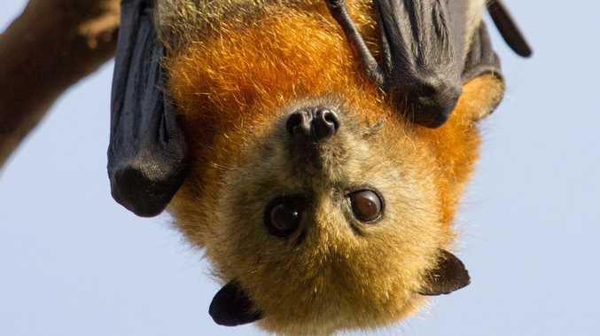 Fears for bats as Southeast set to swelter