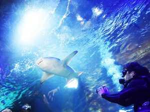 SEA LIFE's new shark dive experience