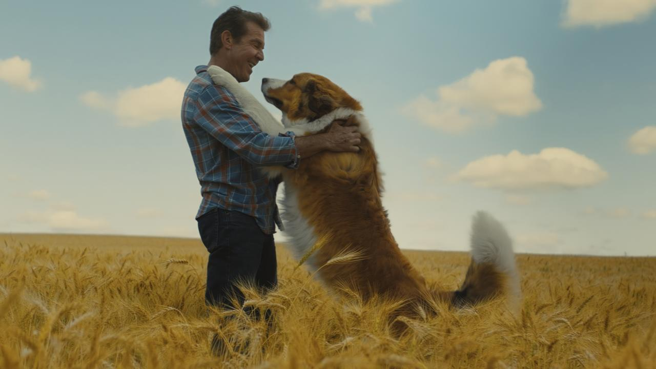 Dennis Quaid in a scene from A Dog's Journey. Picture: Universal Pictures