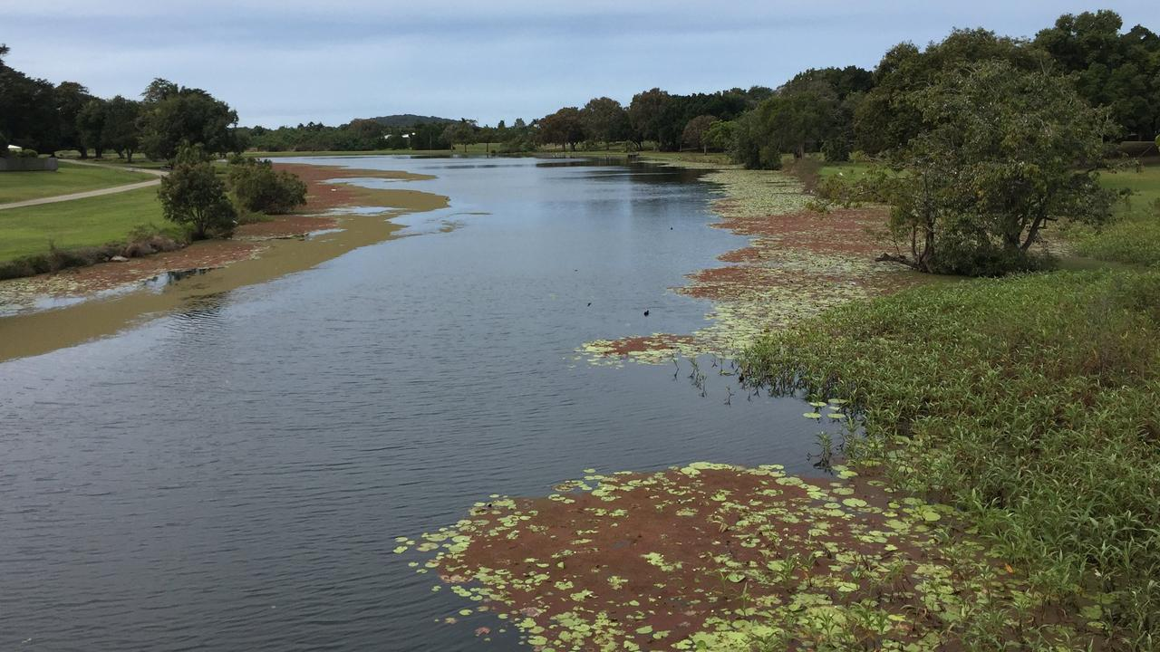 Mackay Regional Council said the native floating plant Azolla in The Gooseponds had died and was decomposing depleting the water of oxygen and killing off the fish on Thursday December 4. Picture: Mackay Regional Council
