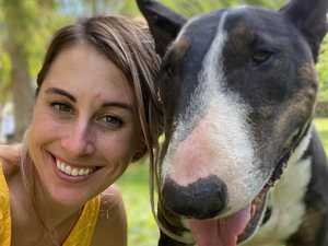 Wonder drug killing dog cancers
