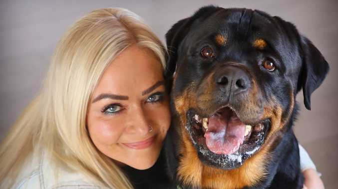 Bosco the rottweiler is charming the social media crowd