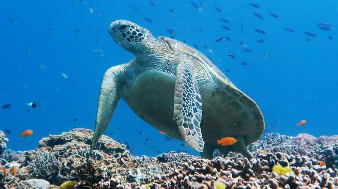 CRITICAL DIAGNOSIS: Great Barrier Reef's health declines