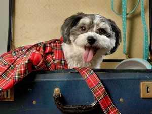 Och! Big hearts send wee Bonnie to Scotland