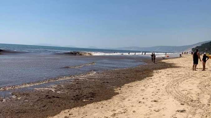 PHOTOS: Foul-smelling seaweed 'like an oil slick' at Rainbow