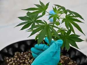 Police stumble upon Montrose grow operation