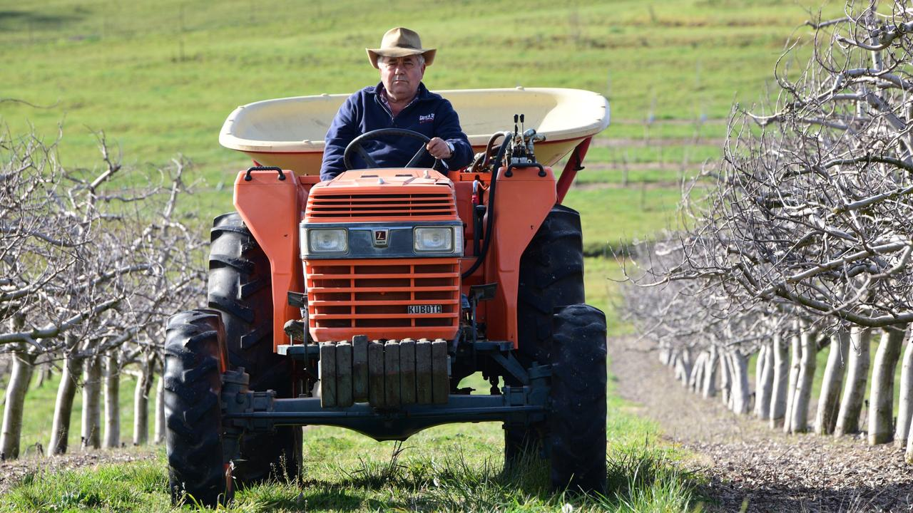 Orchard farmer Guy Gaeta in Orange in NSW has been screaming out for fruit pickers for this season's harvest.