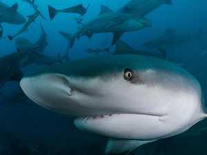 Flipped by a shark: Kayaker's terrifying encounter