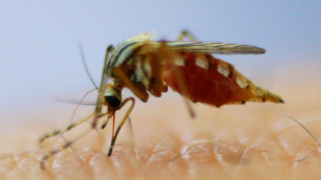 The warm autumn and early spring weather has extended the mosquito danger season in Northern NSW.
