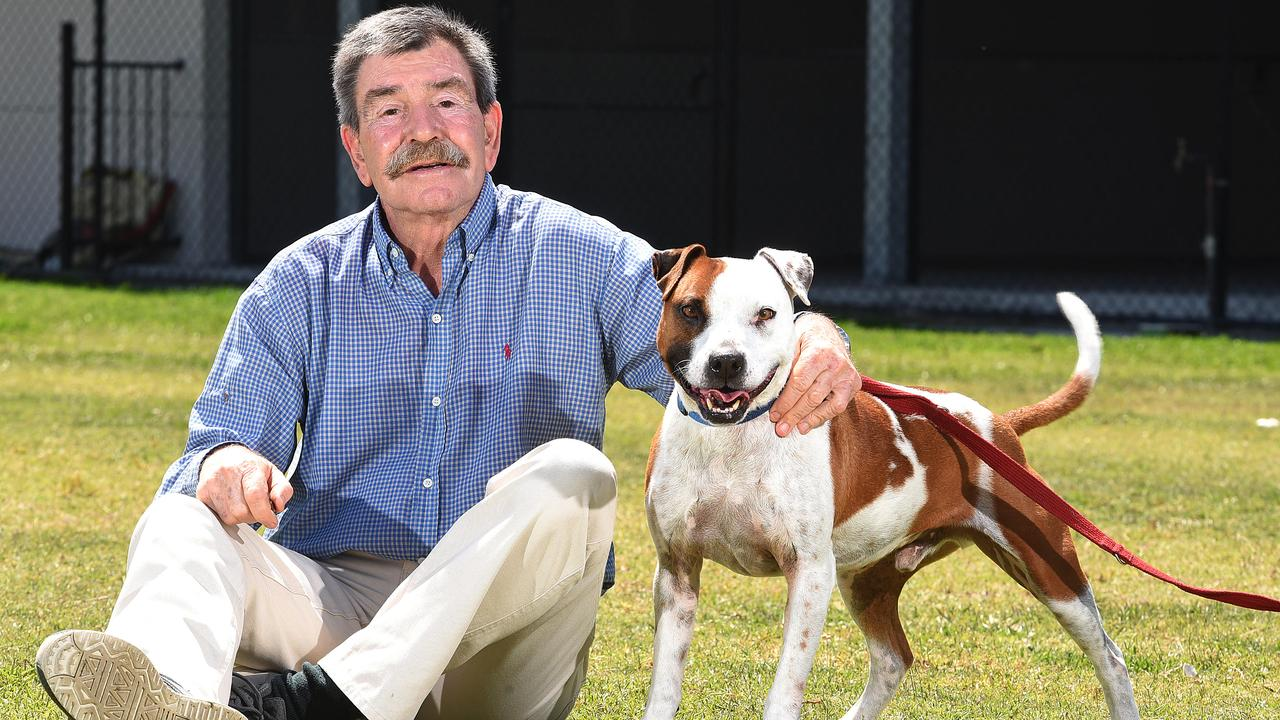 Michael Beatty at the RSPCA in Wacol with Zeus the Staffy. (AAP image, John Gass)