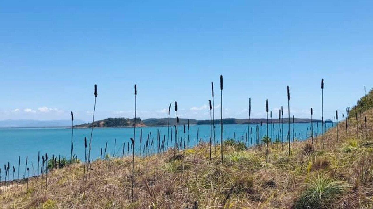 Redcliffe Island near Seaforth. Picture: Tania Battson