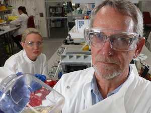 UQ team 'devastated' by halt to COVID-19 vaccine