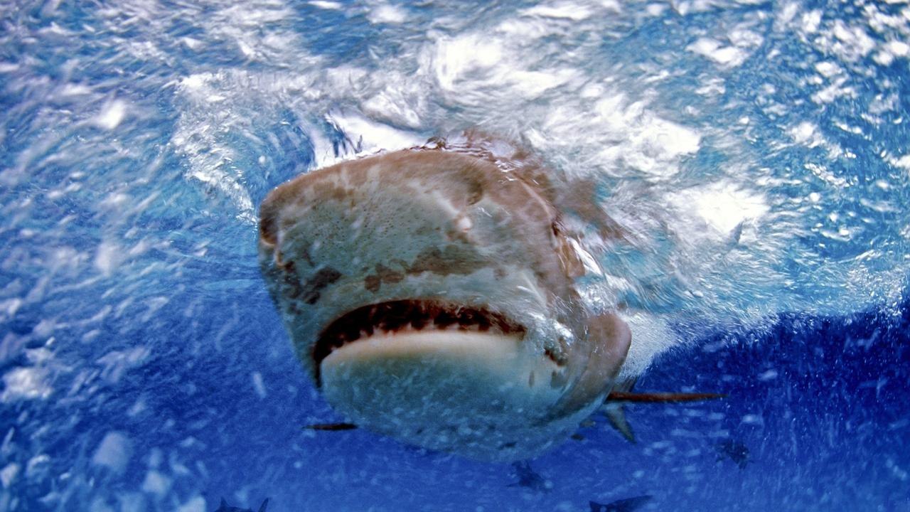 The waters along Mackay and Whitsundays have been the scene of a number of vicious shark attacks.