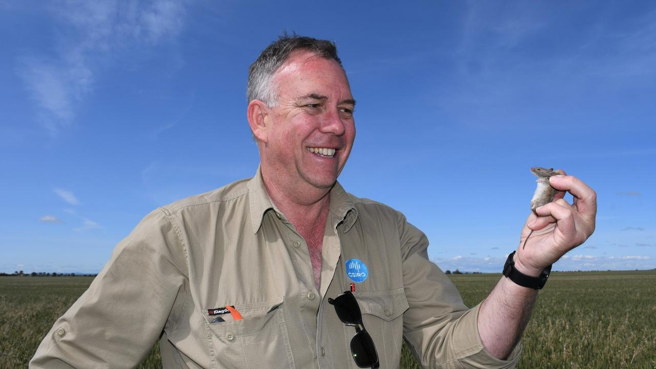 MOUSE PLAUGE: Researcher Steve Henry from CSIRO, Australia's national science agency. Pic: Supplied