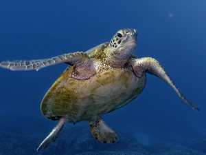 Friends argue 'reciprocal rights' over turtle kill