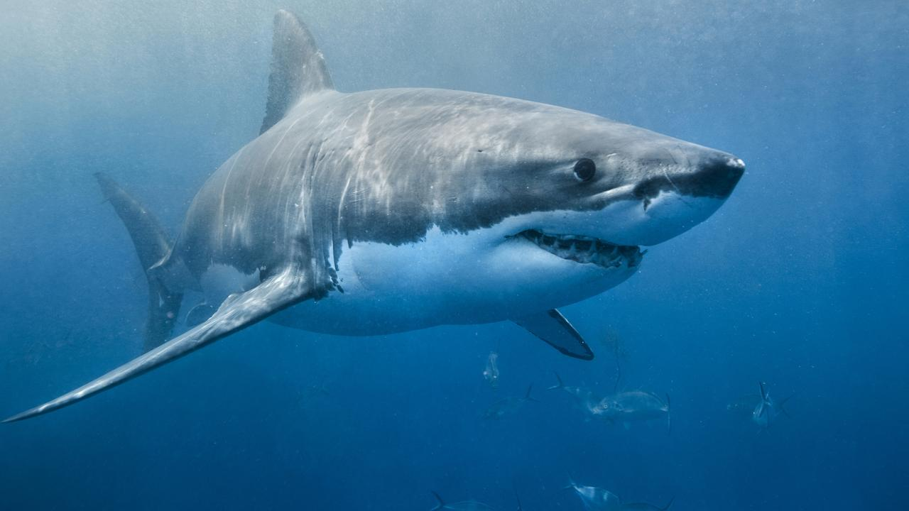 Since appearing on the big screen in the 1975 film adaptation of Jaws, sharks have been portrayed as villainous predators – but are we treating sharks fairly?