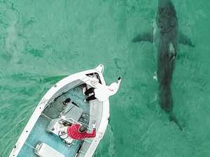 Shark zone: Australia's most dangerous beaches revealed