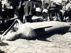 JAWS OF DEATH: Townsville's shocking history of fatal shark attacks