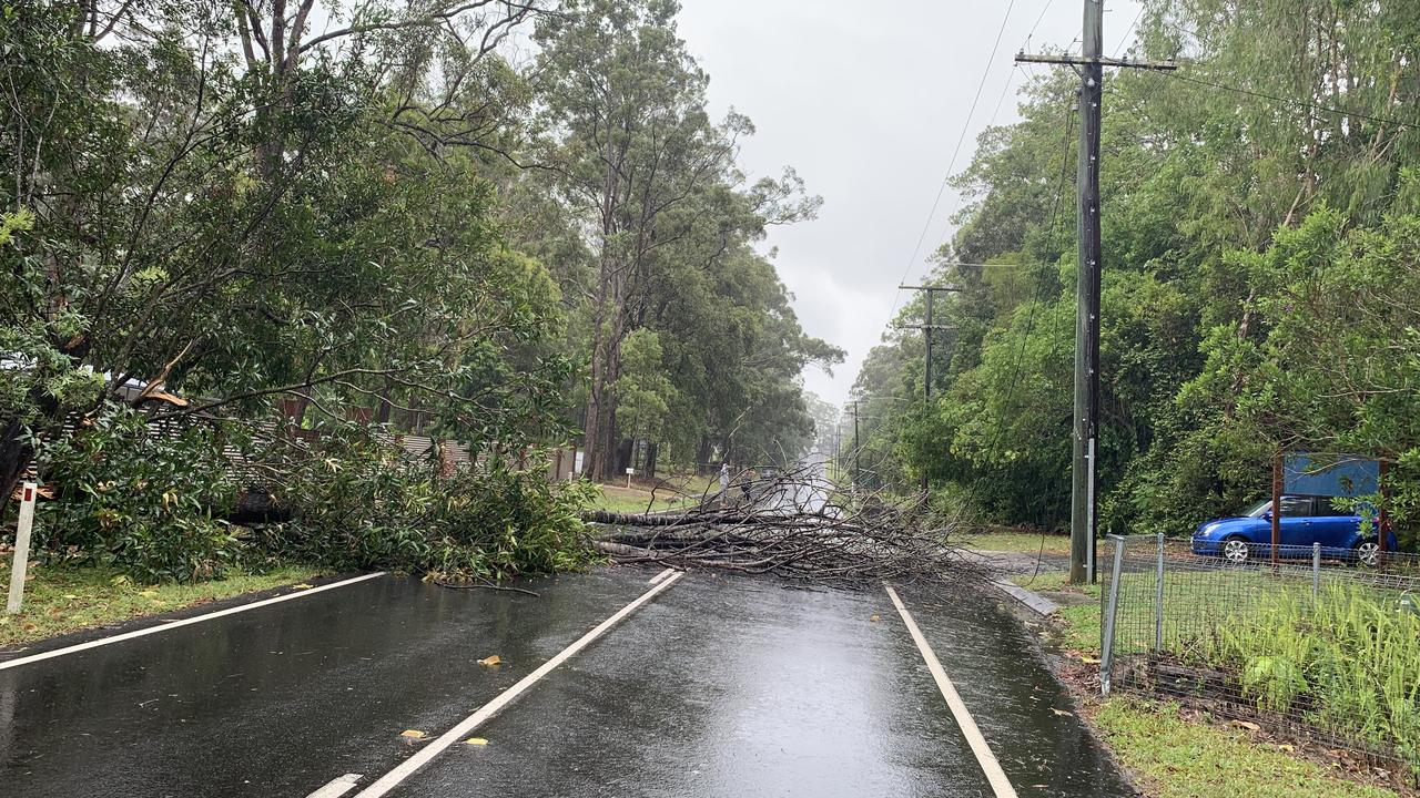 Trees have fallen down across Eudlo Flats Rd at Diddillibah.
