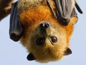 Bat infected with disease deadly to humans found in park