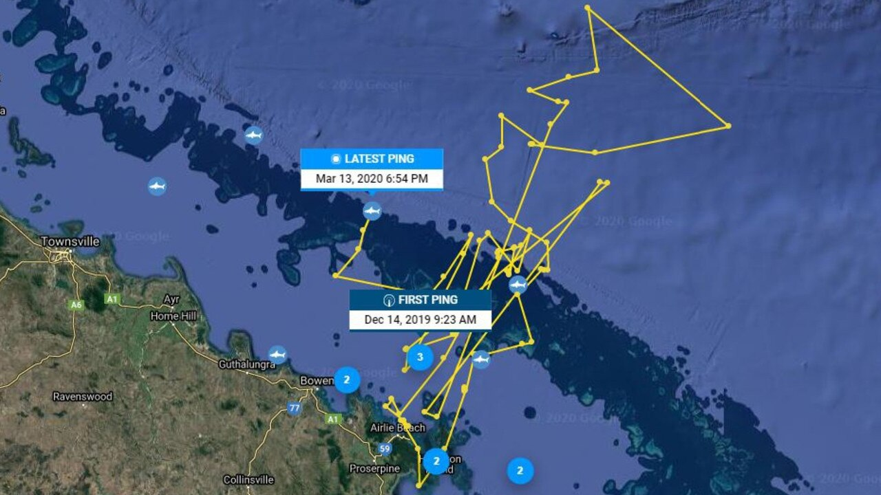 Tiger shark Zake has been seen most frequently around the Whitsundays but also swims to the outer reefs a lot. Picture: Ocearch