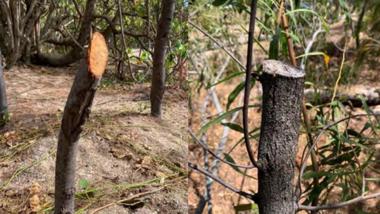 Mackay Regional Council discovered an extreme case of vegetation vandalism at Headland Dr, Haliday Bay. Picture: Mackay Regional Council
