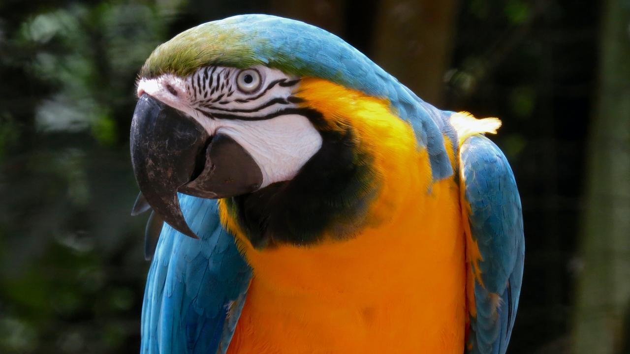 Do you remember the bird park at Bloomsbury service station? Email heidi.petith@news.com.au. Picture: Jaime Dantas