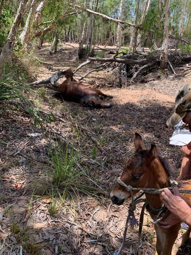 The grisly scene near Forestry Road, Bluewater, where a mare and stallion had been shot, leaving a newborn foal to fend for itself