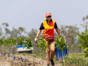 Three macadamia varieties on global threatened species list