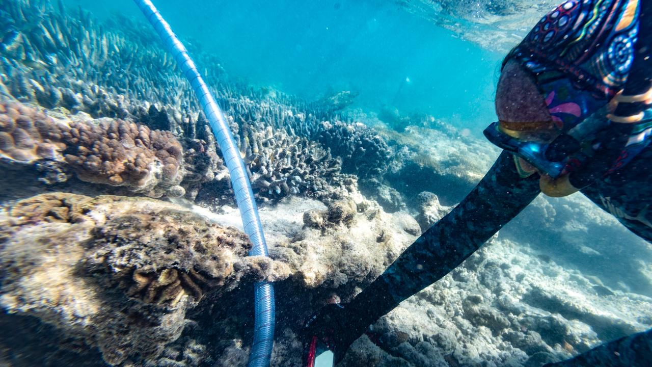 GREAT RESULTS: New research into coral IVF has had great results with coral larvae thriving and likely to spawn as early as next year. Credit: Southern Cross University