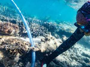 How Coral IVF could be a saviour for the reef
