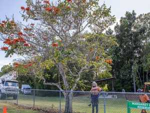 How you could get a free native tree from council