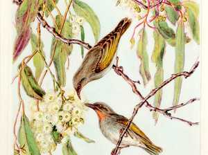 ARTEFACTS: Discovering watercolour birdlife