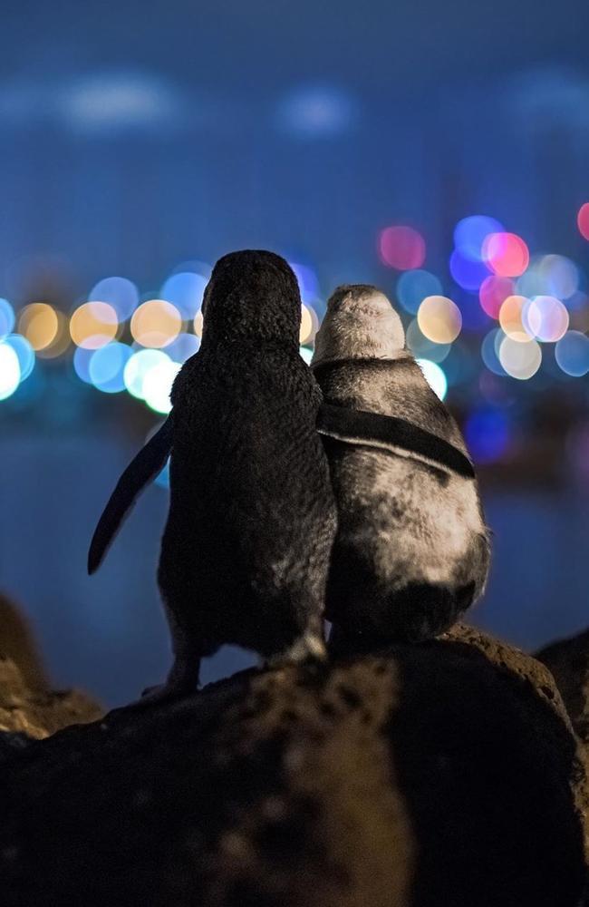 Penguin Hug. Picture: @Australia/Instagram