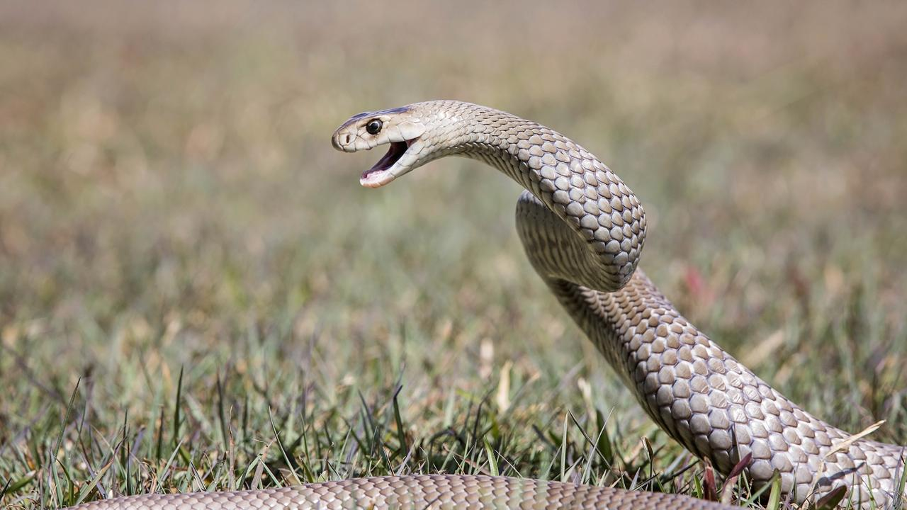 A man in his 60s was bitten by a snake that was 'brown in colour'. Picture: Rachel Vercoe