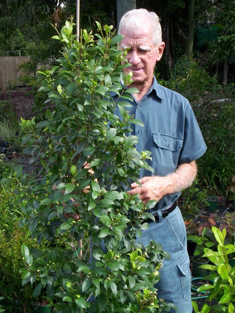 Phil with Syzygium Bush Christmas
