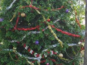 GARDENING: Christmas trees the same around the world