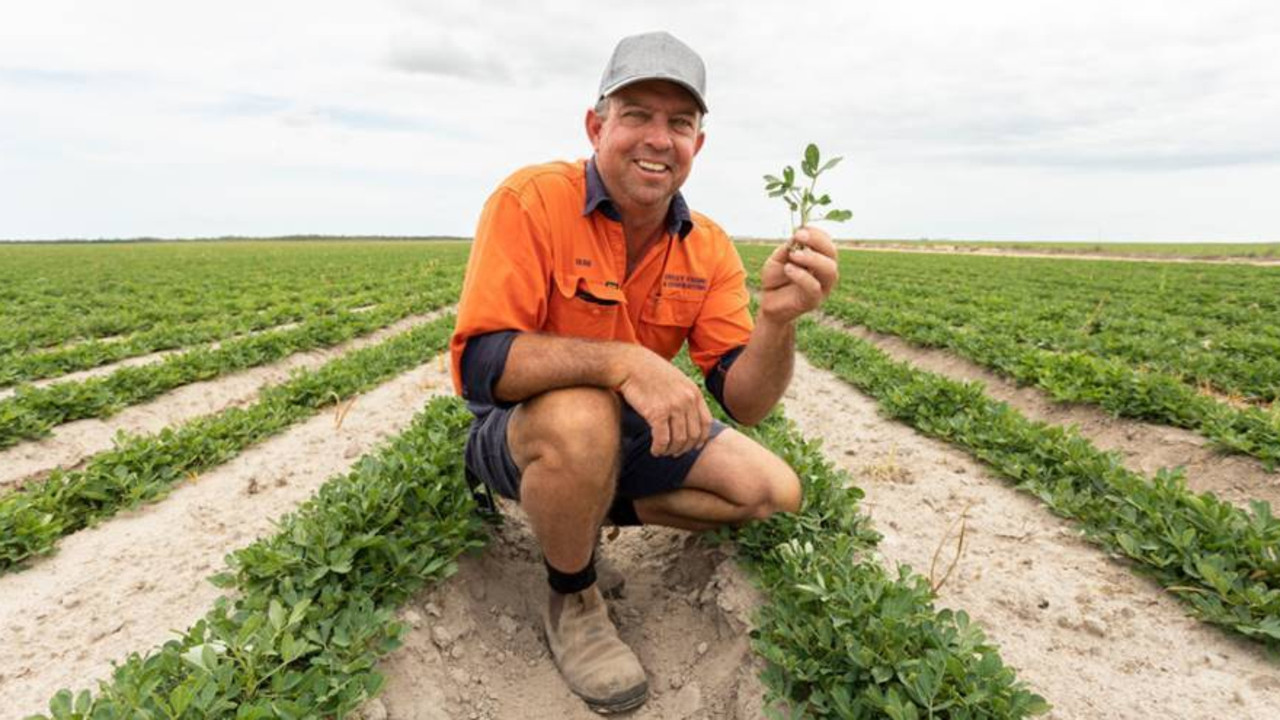 Dean Caley, usually grows peanut in Alloway, near Bundaberg, but due to water concerns he's sitting this season out, growing soybeans instead.