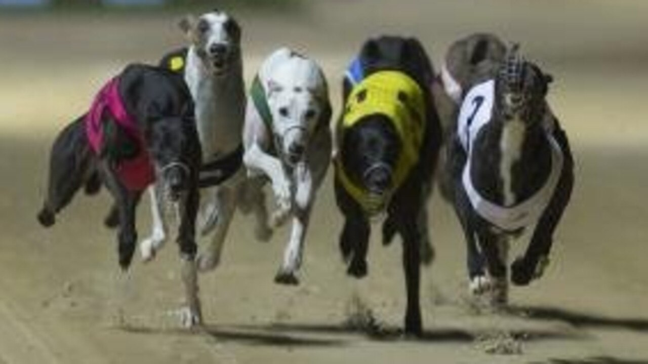 There are 10 races on the program at Rockhampton's greyhound meeting on Wednesday night.