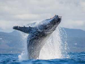 Woopi's whale trail boardwalk a step closer