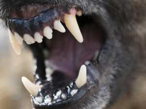 Dog bites woman on face at Amamoor