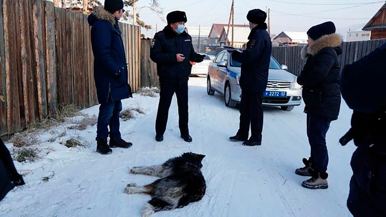 A beautician was mauled by a pack of wild dogs that tore off her face and ripped off all her clothes in subfreezing eastern Siberia. WARNING: GRAPHIC