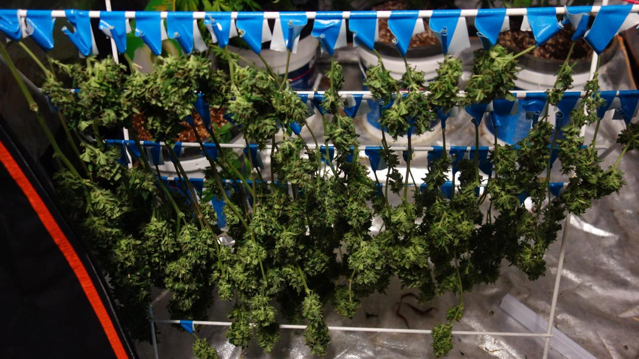 A drying rack used in an alleged drug house uncovered by police as part of an operation targeting the unlawful production of cannabis. Picture: supplied