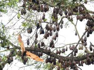 Council addresses Nerima Gardens closure amid bat problem