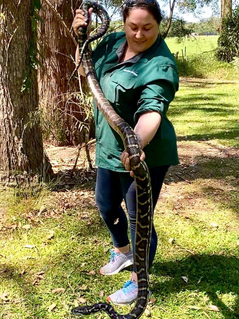 UNCONCERNED: Gemma Smith, of Gem Snake Catcher Sunshine Coast, says recent snake bites aren't a cause of concern.