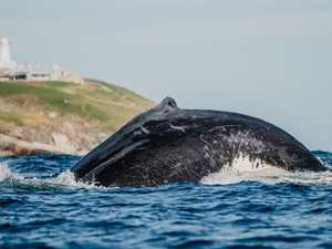 Something fishy about whale trail funds warn resident groups