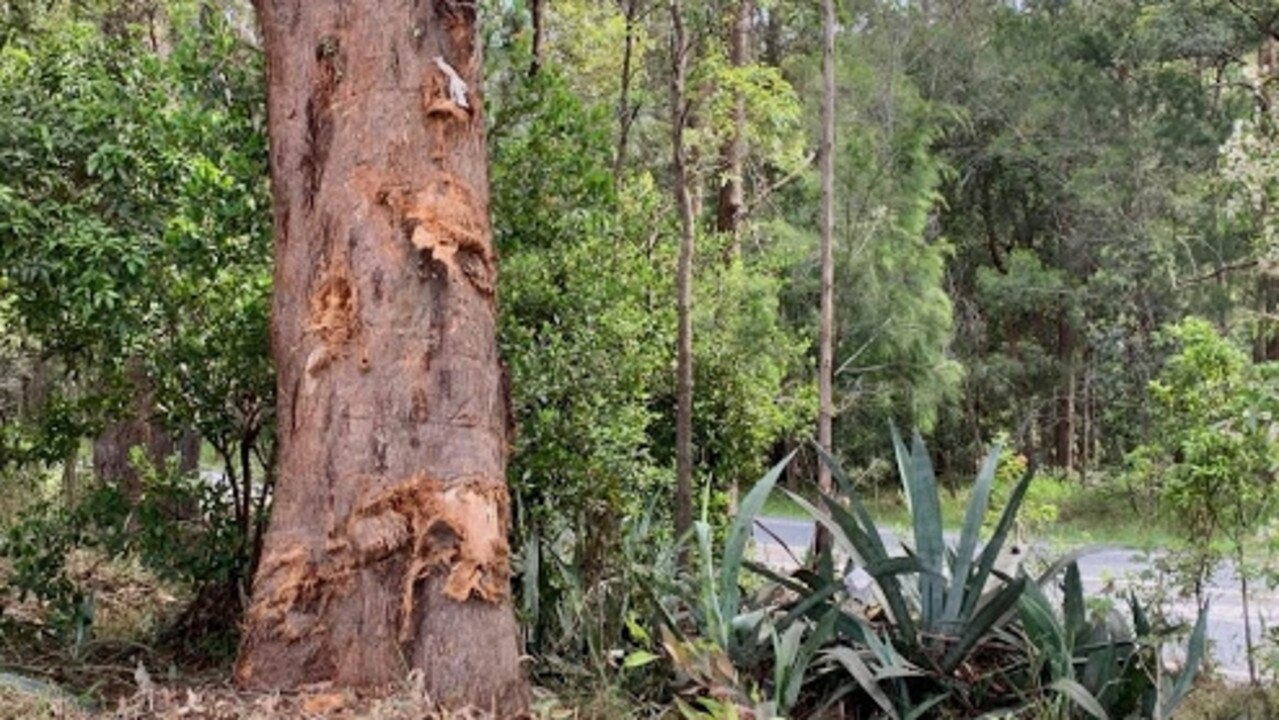 An 18-year-old died after the stolen car he was driving collided with a tree at Kulangoor. Picture: Patrick Woods.
