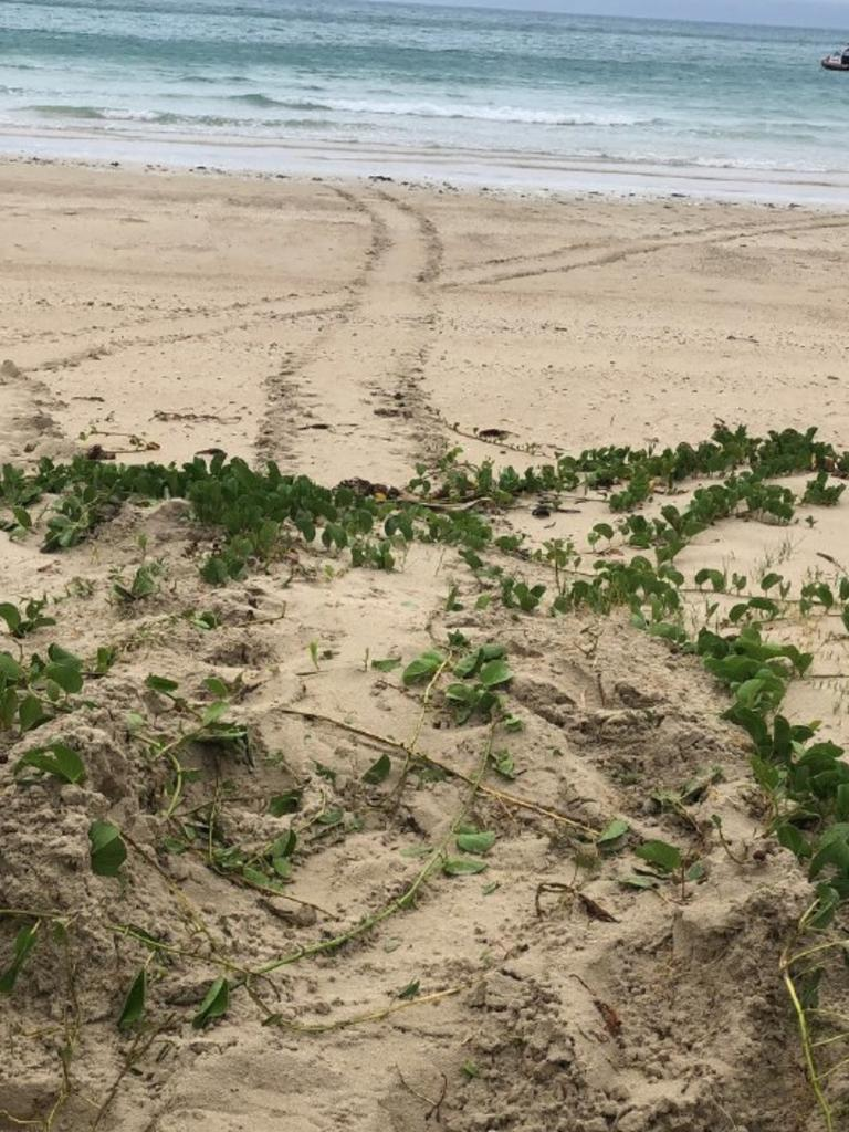 Keswick Island resident and turtle advocate Rayna Asbury took this photograph of turtle tracks at Basil Bay on December 26, 2020. Picture: Contributed