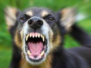 BREAKING: Dog bites woman on leg in South Rocky