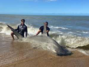'It's part of fishing': Shark explosion dismissed
